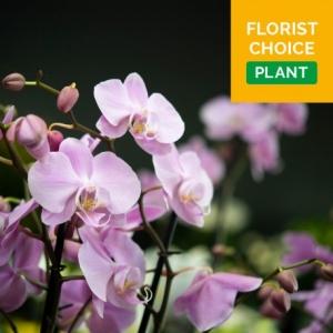 Florist Choice Plant or Planter